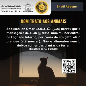 Bom trato aos animais