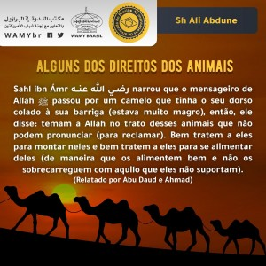 Alguns dos direitos dos animais